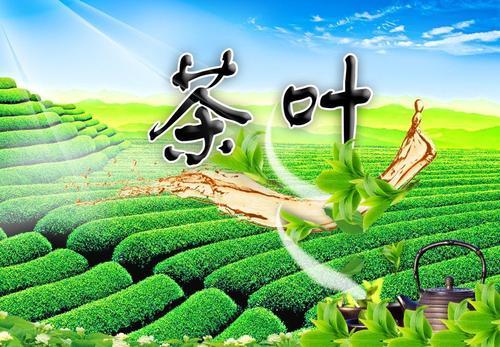茶叶商城小程序开发的功能和价格